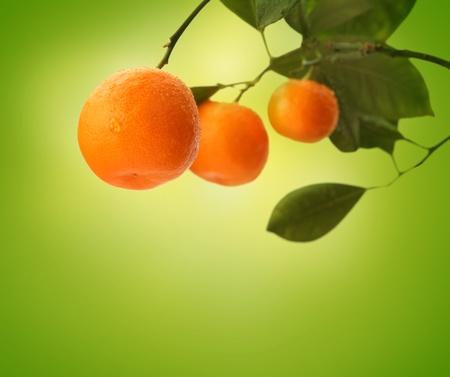 orange branch on green Stock Photo - 13326808