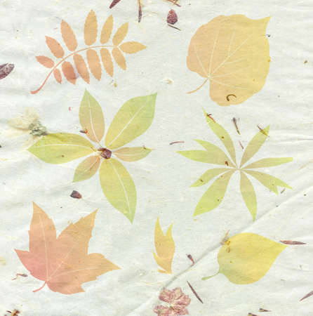textured background with autumn leaf photo