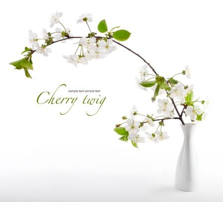 fleur de cerisier: cerise brindille en fleurs dans un vase Banque d'images