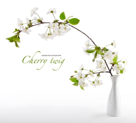 cherry twig in bloom in vase photo