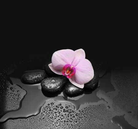 black stones and orchid with water drops photo