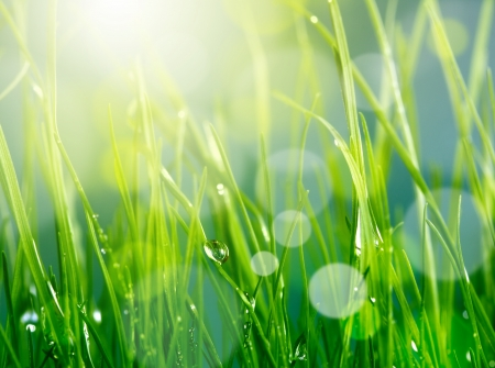 soft green grass background