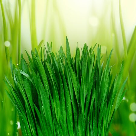 grass with water drops photo