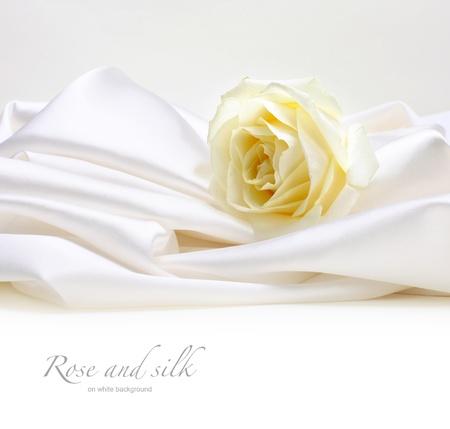 rose on white silk background photo
