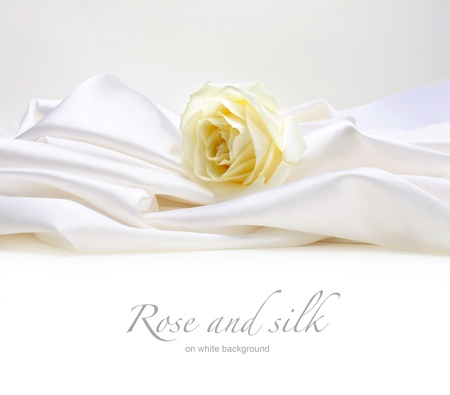 rose on white silk background photo