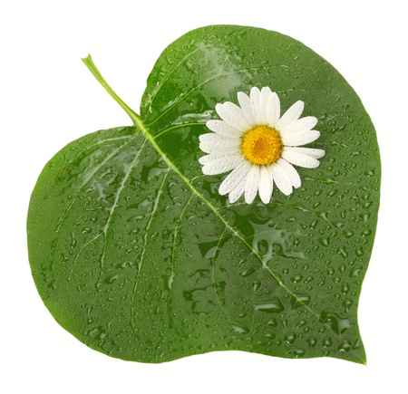 green heart-shaped leaf with flower photo