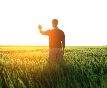 麦畑、日光の男