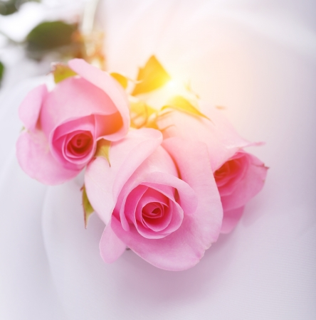 pink roses on a white silk photo