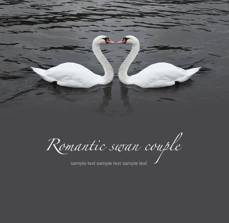 swan pair: Romantic swan couple in black water