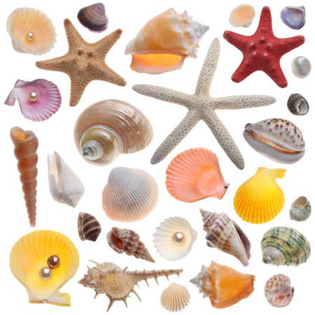 nautilus shell: Seashell collection isolated on the white