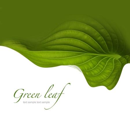 el fondo verde de la hoja