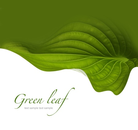green leaf background Stock Photo - 20145273