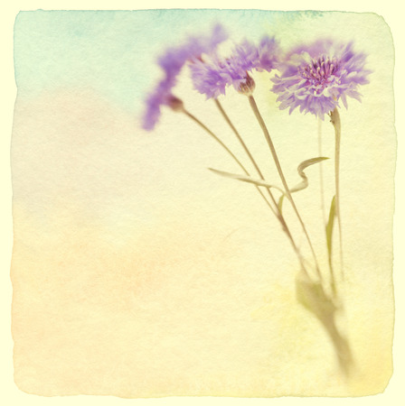 Blue cornflower  Soft focus  Vintage retro style  Made with lens-baby and macro-lens  photo