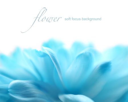 コピー スペース製レンズの赤ちゃんとマクロ レンズでソフト フォーカス花の背景