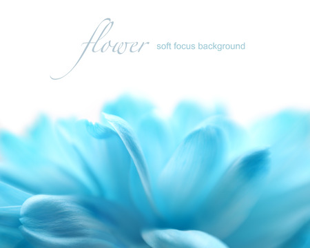 Soft focus flower background with copy space  Made with lens-baby and macro-lens