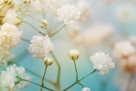 soft   focus: White flower on blue background. Soft focus.