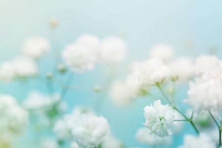 Witte bloem op een blauwe achtergrond. Soft focus.
