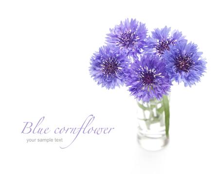 fiordaliso: bluette. Bouquet di fiori isolato su bianco.