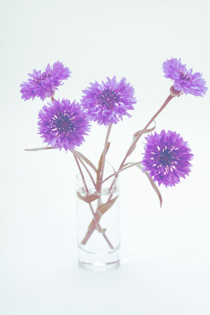 bluet: Blue cornflower. Flower bouquet. Vintage retro style.