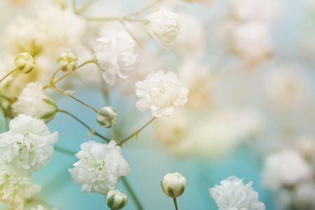 focus on background: White flower on blue background. Soft focus.