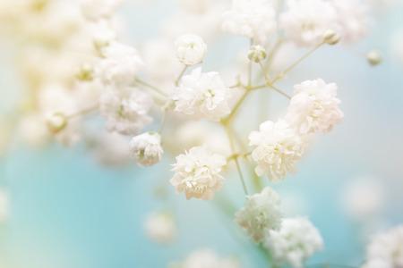 青色の背景に白い花。ソフト フォーカス。 写真素材