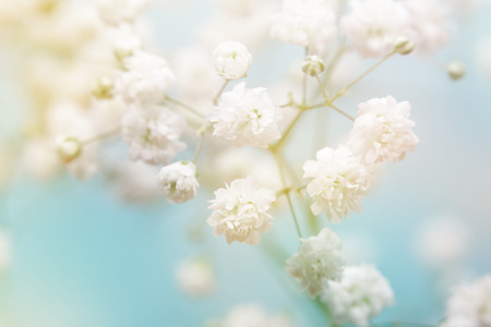 pastel colors: White flower on blue background. Soft focus.