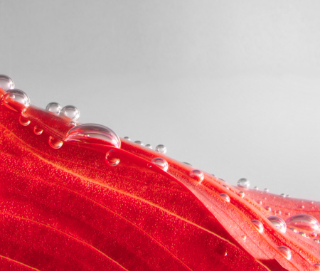 leaf water: red autumn leaf with water drops Stock Photo