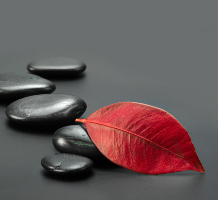 black stones: black stones with autumn red leaf
