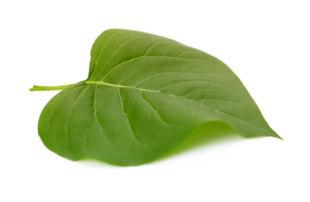 Green leaf on white background.