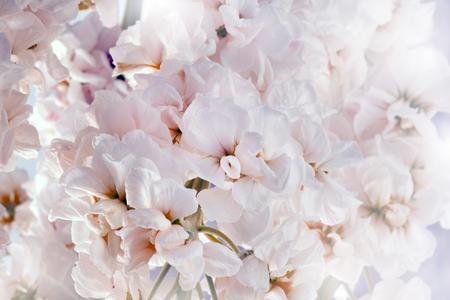 Flower soft white bouquet background.