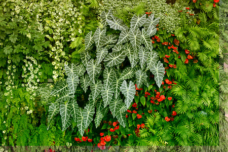 Wall with tropical plants. Nature green background.