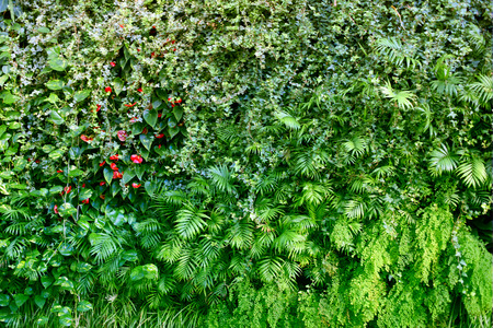 Wall with tropical plants. Nature green background. Stock Photo - 119976099