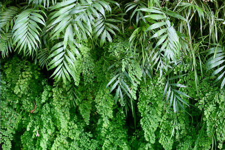 Wall with tropical plants. Nature green background. Stock Photo - 119976102