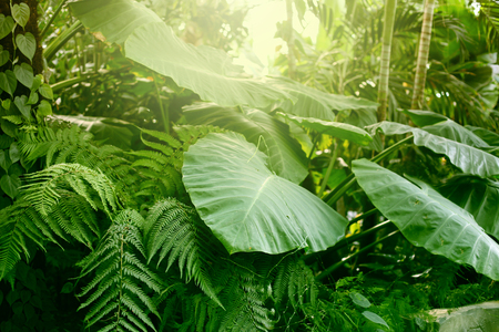 Forest with tropical plants. Nature green background. Stock Photo