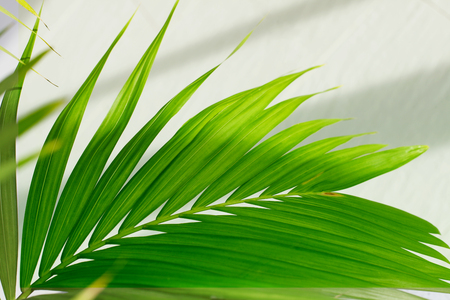 Palm leaves. Tropical plants. Nature background. Stock Photo - 120322149