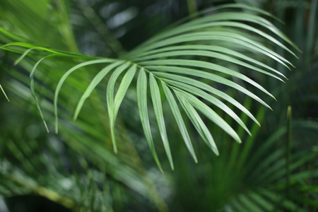 Palm leaves. Forest with tropical plants. Nature green background. Stock Photo