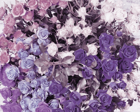 Flower bouquet background. Violet and lilac roses.