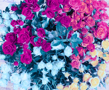 Flower bouquet background. Pink (magenta) and blue roses. Stock Photo