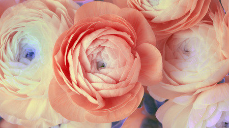 Red anemone flower bouquet background Stock Photo