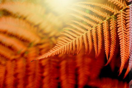 Fern leaves in tropical forest plants. Nature red background. Soft focus.