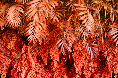 Wall with tropical plants. Nature red background.