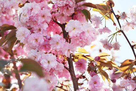 Flower spring bouquet with leaf.  Soft focus. Nature blur background. Pink (lilac) color. Foto de archivo - 137892398