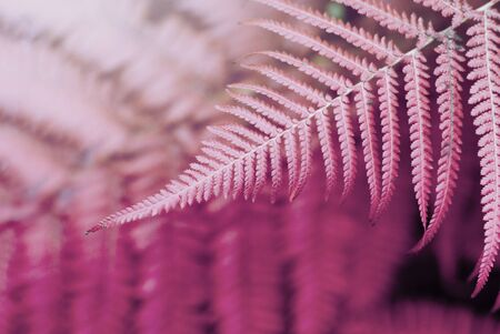 Fern lilac leaf  in tropical forest plants. Nature  background. Soft focus.