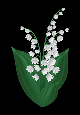 lily of the valley: Vector image of a spring flower - lily of the valley