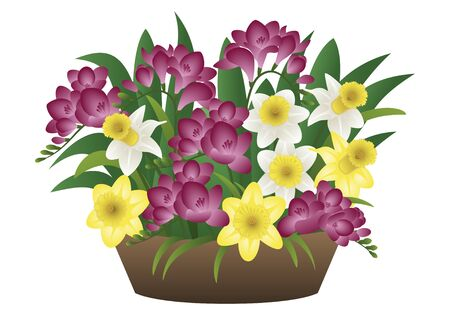 Vector image of a spring flower narcissus and freesia royalty free stok fotoraf vector image of a spring flower narcissus and freesia mightylinksfo