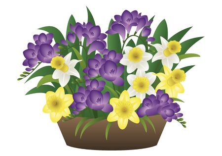 eco flowers basket: Vector image of a spring flower - narcissus and freesia