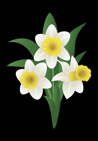 jonquil: Vector image of a spring flower - narcissus