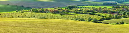 green rows of sprouted corn on a private agricultural field with trees on the horizon Foto de archivo