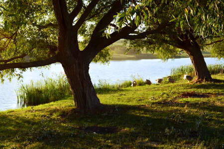 riverside trees: Calm Tree And River Stock Photo