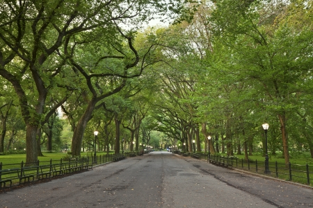 central park: Central Park. Image of  The Mall area in Central Park, New York City, USA.